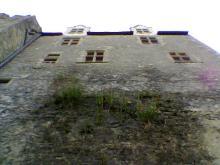 城壁のハーブ