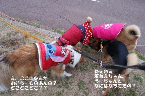 wan1042.jpg