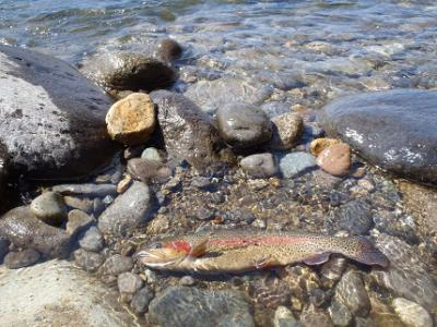 2013年の釣り・・・1回目