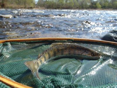 2013年の釣り・・・4回目