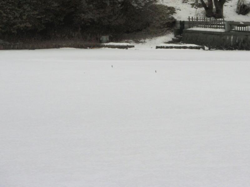 P1010255 堀の雪景色 800x600