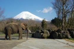 DSC_0091富士山
