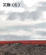 ガザニア(種まき)