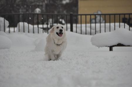 雪山形ー2