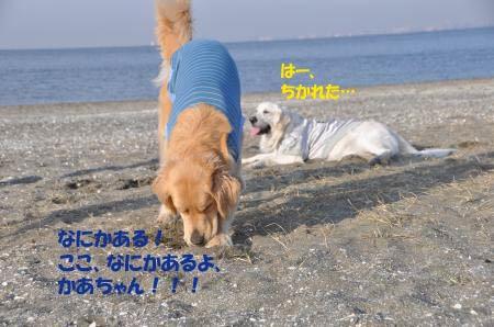 asaumi-10.jpg