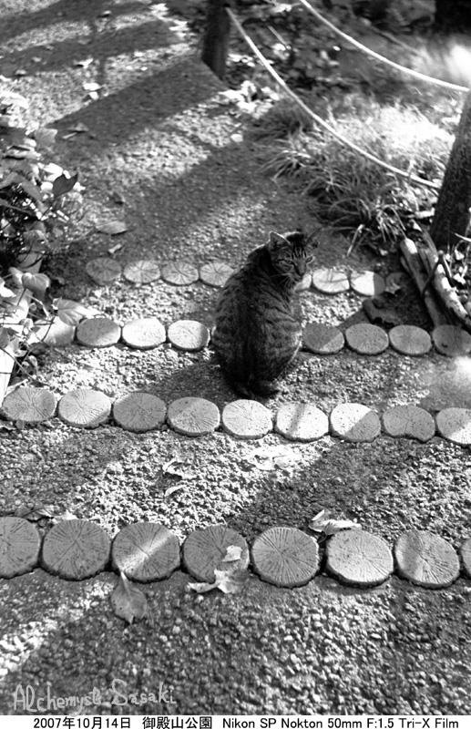 お散歩 猫-1