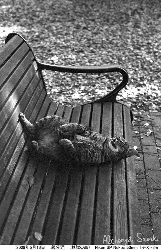 お散歩 猫-3