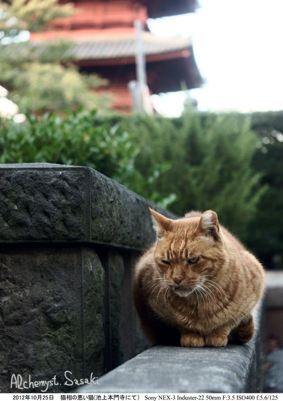 お散歩 猫-9