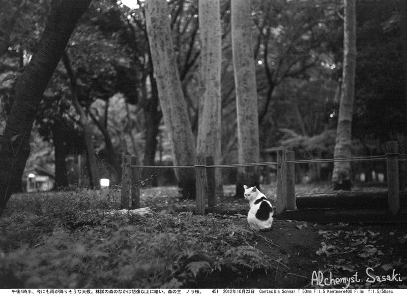 お散歩 猫-8
