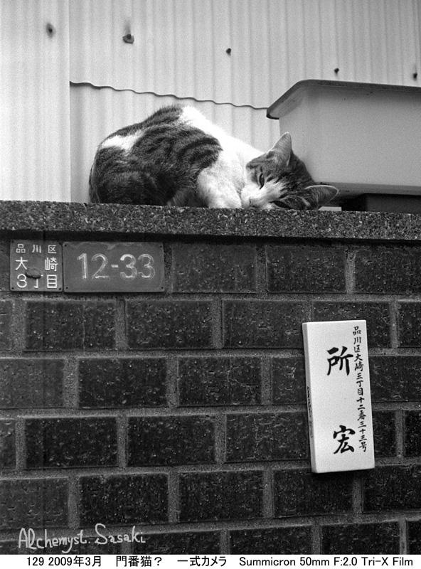 お散歩 猫-6