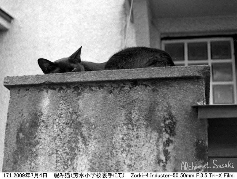 お散歩 猫-7