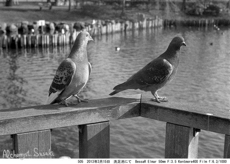 鳥505-7