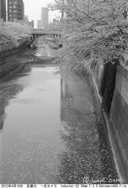 2012年 桜410-1