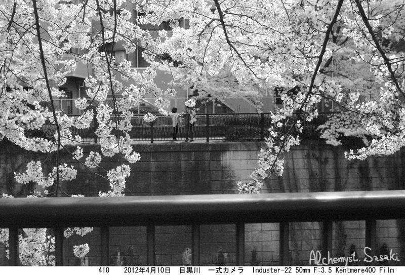 2012年の桜410-6