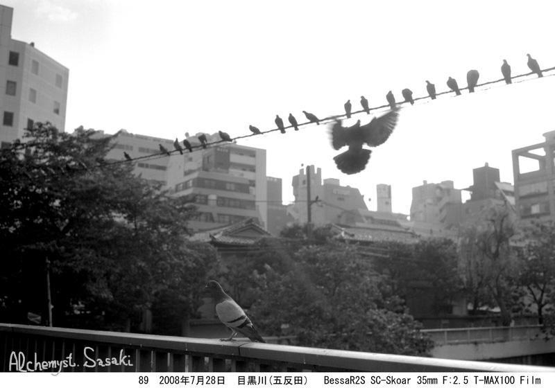 鳥 2008年7月28日 T-MAX100 BessaR2S 五反田、目黒川 Film89