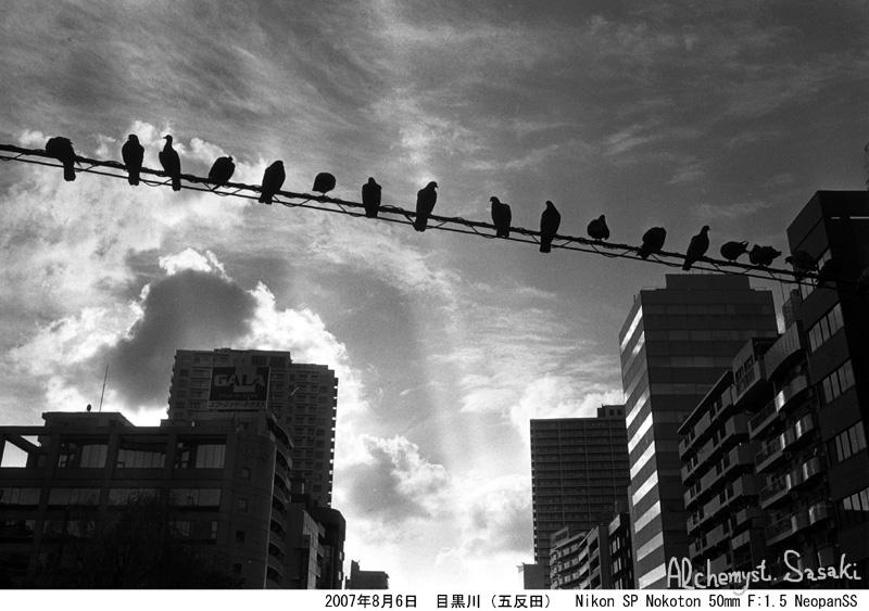 鳥 2007年8月6日 五反田