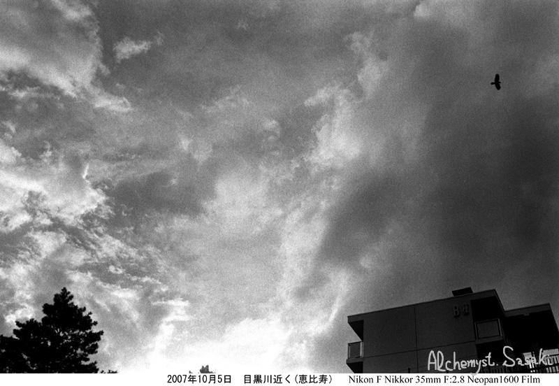 鳥 2007年10月5日、恵比寿、目黒川近く