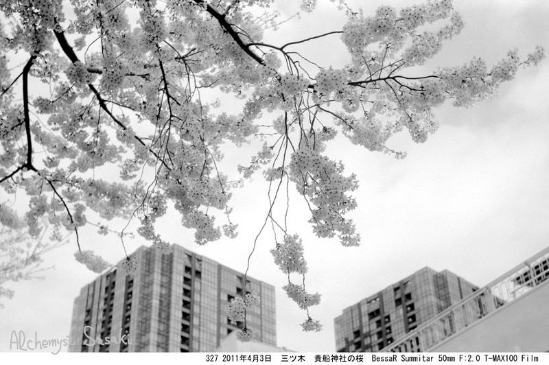 2011年の桜327-23