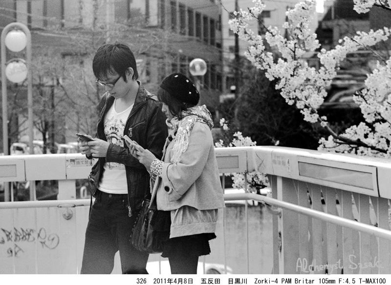 2011年 桜326-6