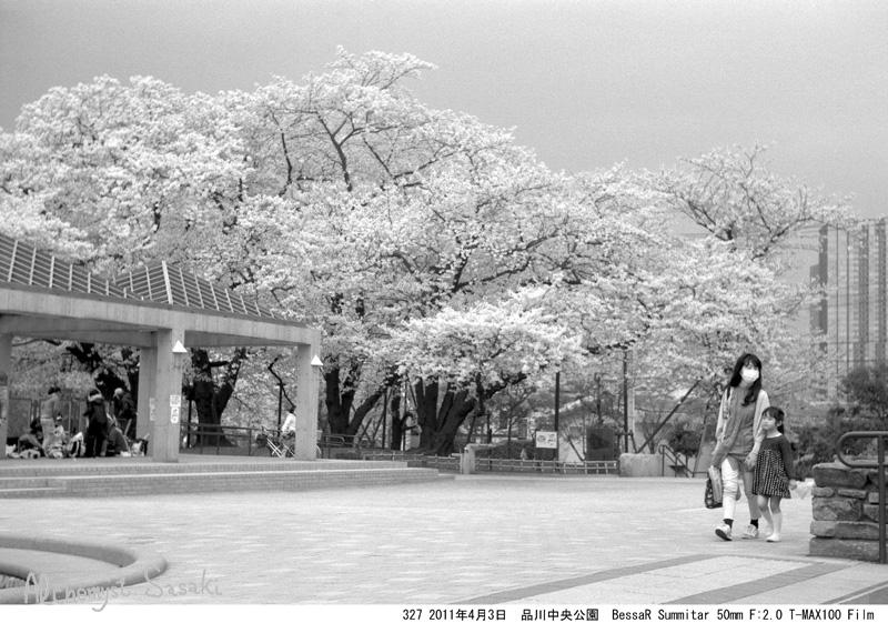 2011年の桜327-2