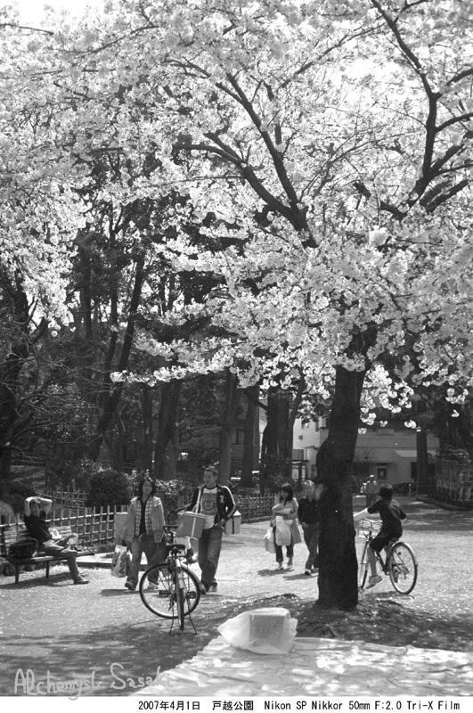 2007年4月1日 戸越公園の桜