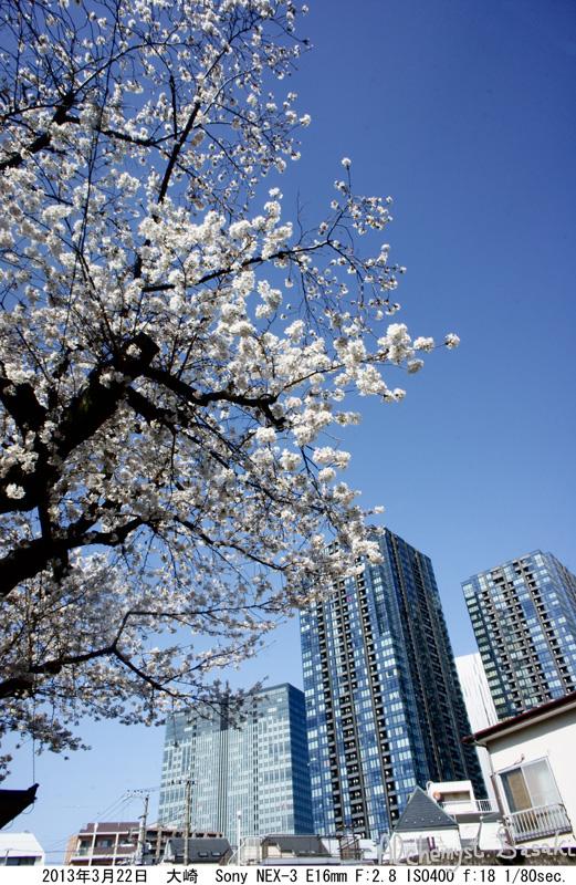 2013年桜DSC04802