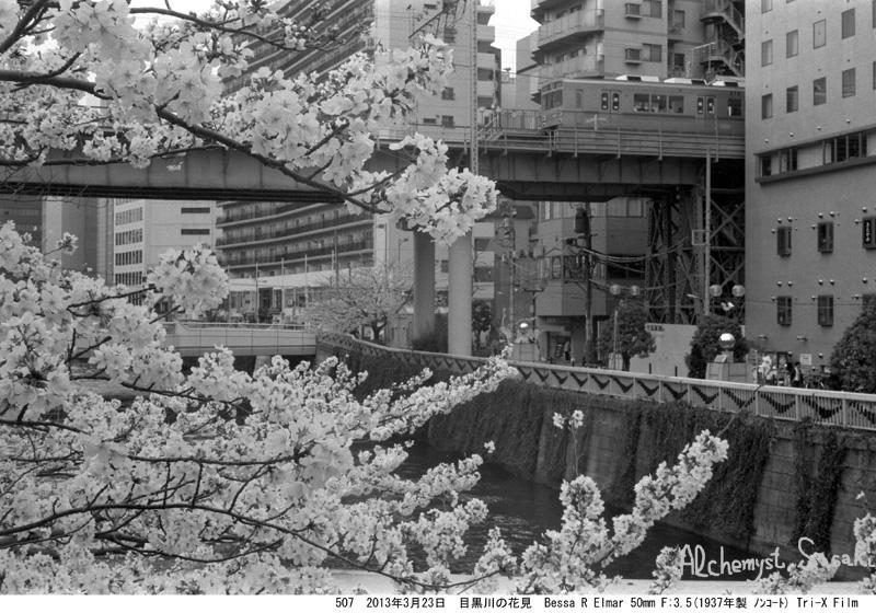 2013年桜507-17