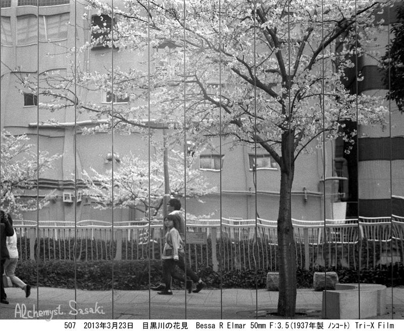 2013年桜507-19