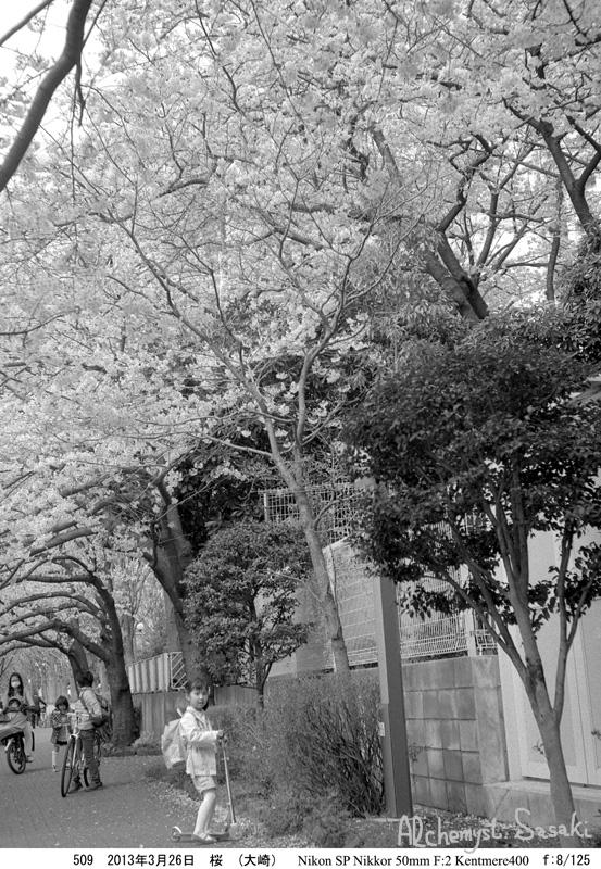 2013年桜509-10