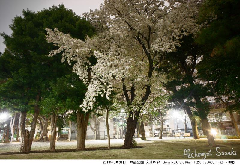 2013年夜桜DSC05316桜