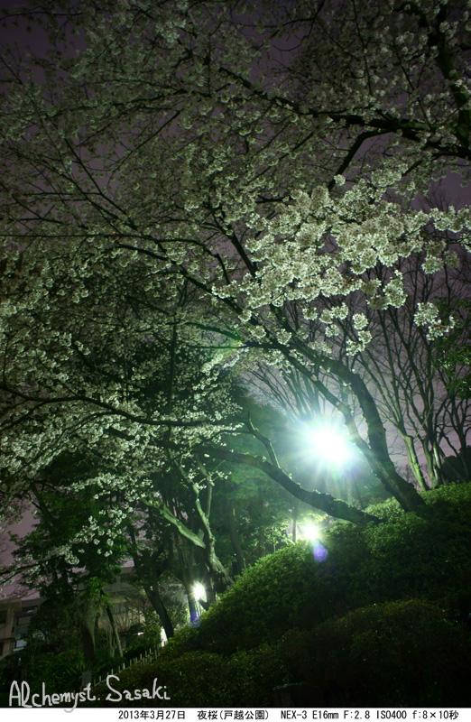 2013年夜桜DSC05051