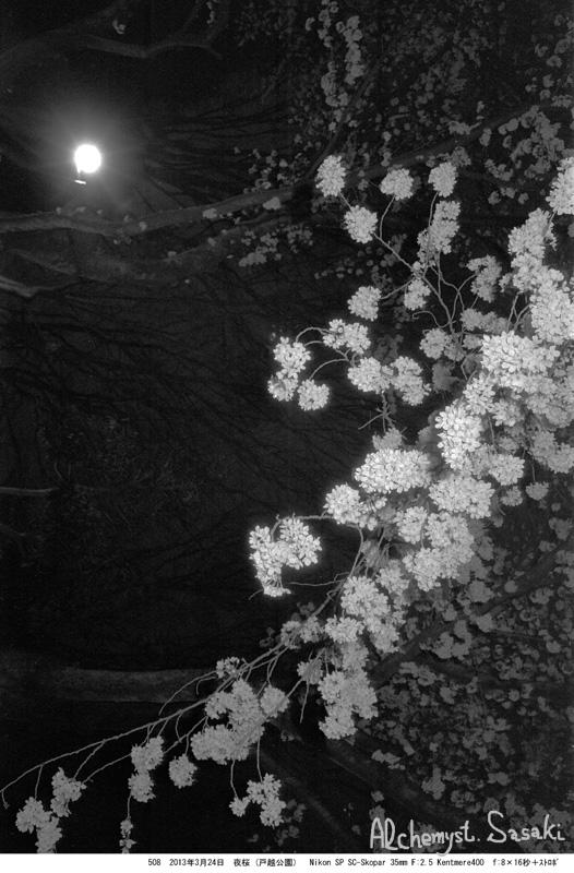 夜桜508-10