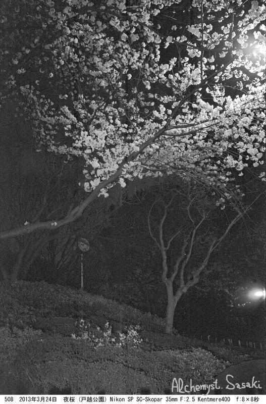 夜桜508-11