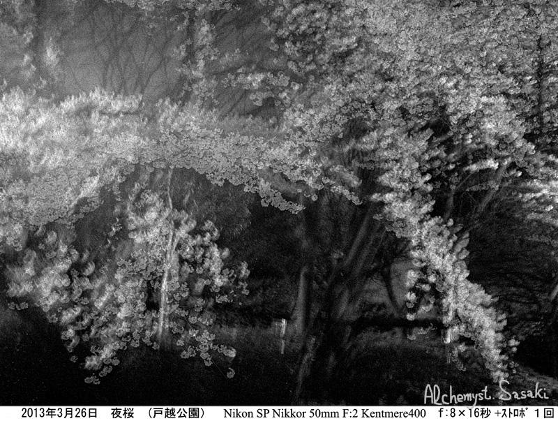 夜桜510-9c