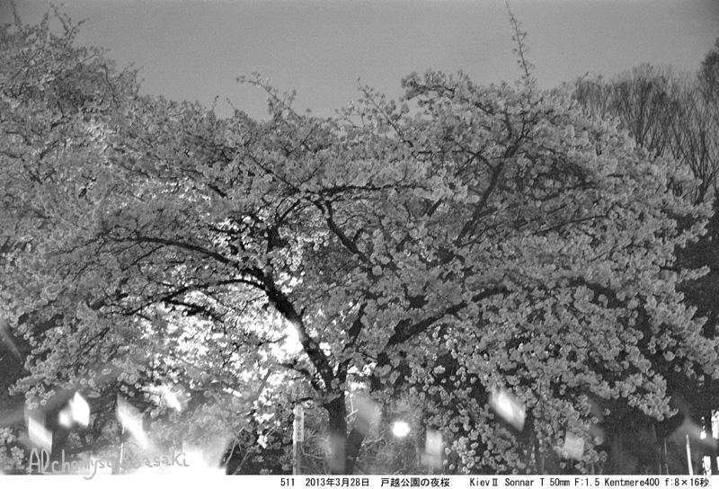 夜桜511-7