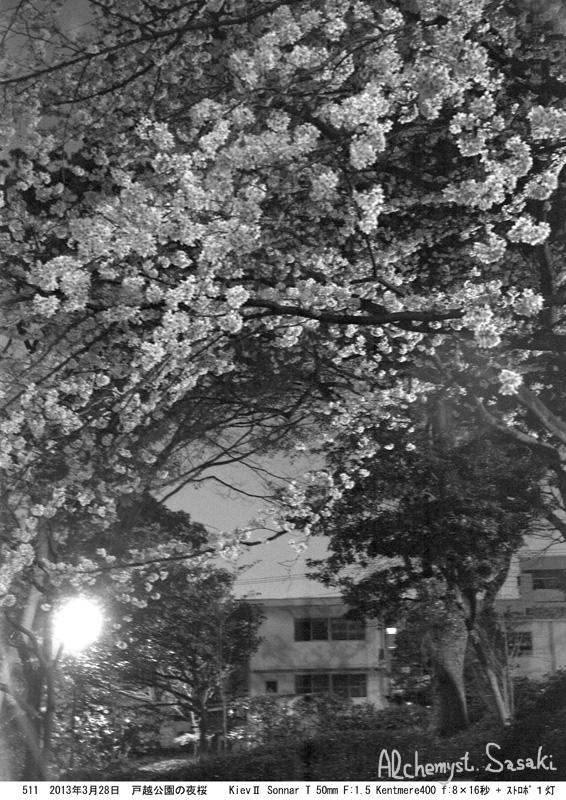 夜桜511-16