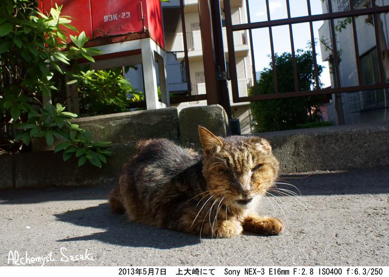 猫DSC06738