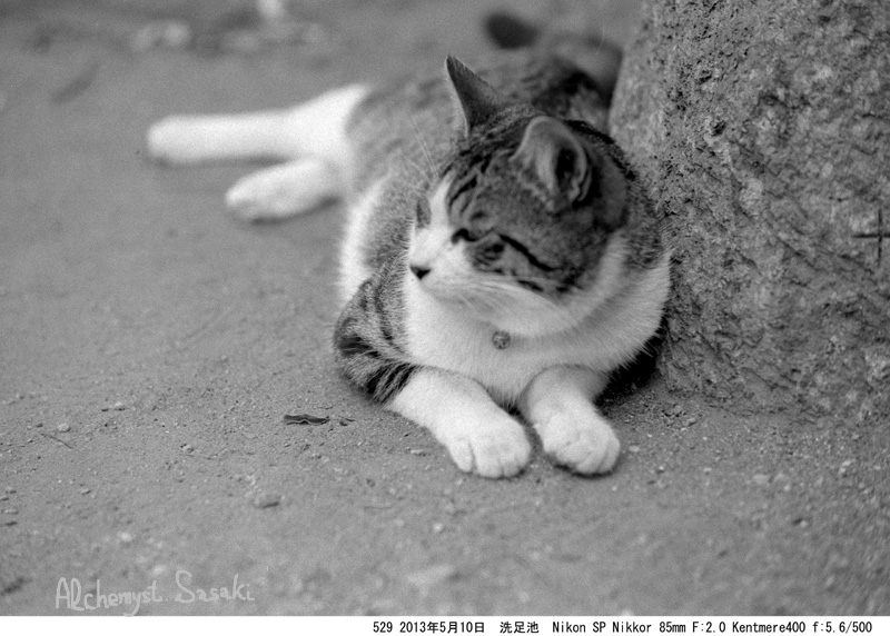 猫529-4