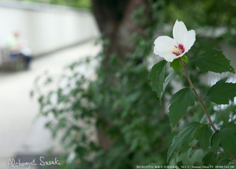 花DSC00597