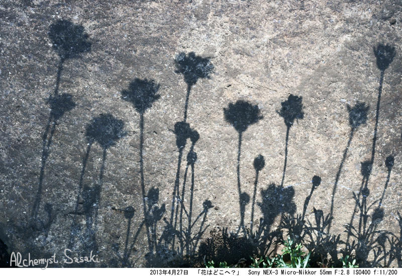 花はどこへDSC06254