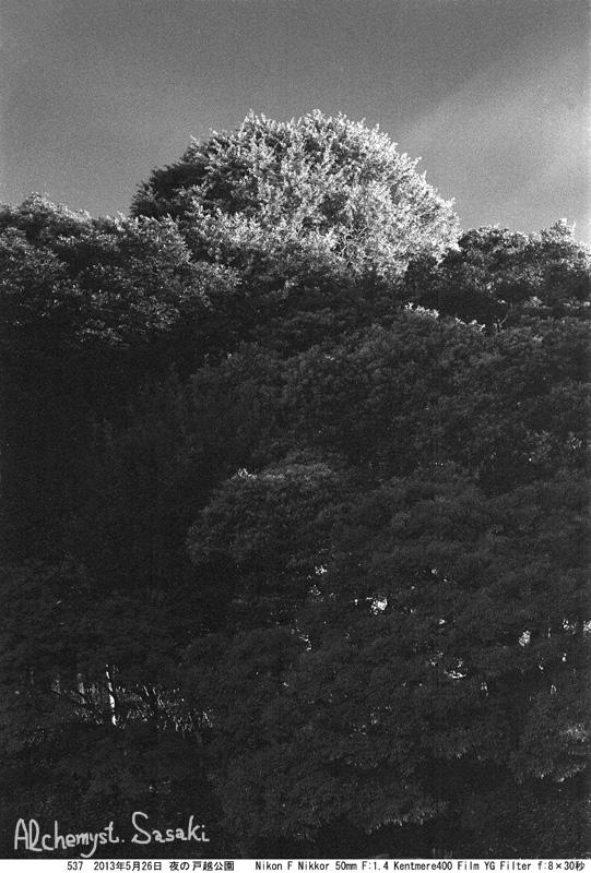 夜の戸越公園537-1
