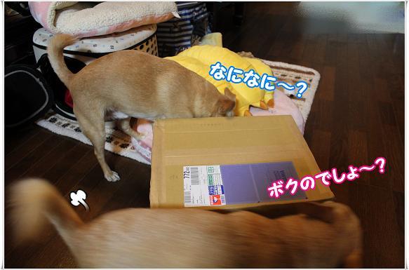 057otodokemono.jpg