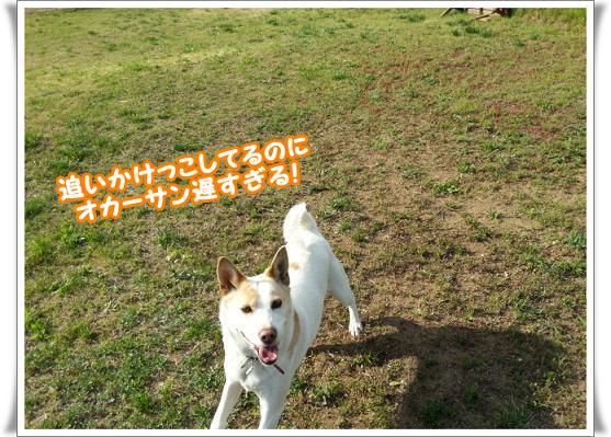 2013-05-02-06oikakekko.jpg