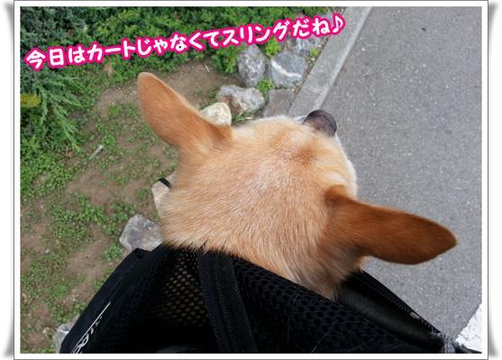 2013-05-03-01dakko.jpg
