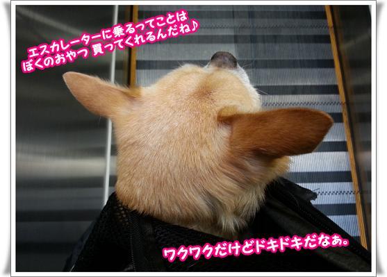 2013-05-03-03wakudoki.jpg