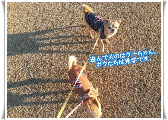 2013-2-23-14kengaku.jpg