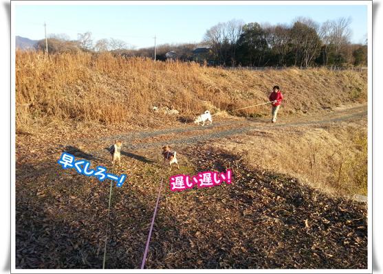 2013-2-23-6osoihayaku.jpg