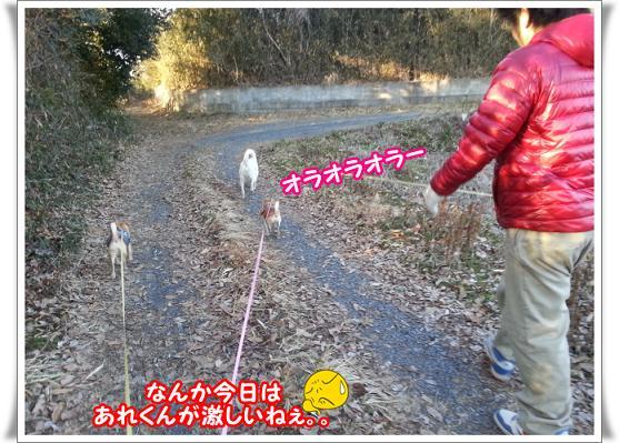 2013-2-23-9hagesiine.jpg