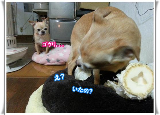 2013-2-25-5gokuri.jpg