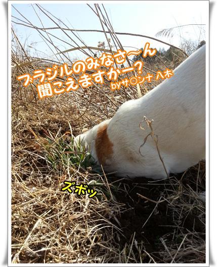 2013-3-9-3kikoemasuka.jpg